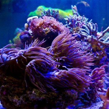 Willkommen liebe Reefer