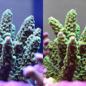 Fotografie in der Meerwasser Aquaristik