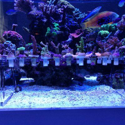 Eine große Menge an Ablegern finden platz im Reefdeck