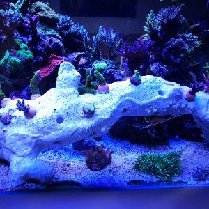 Kleine Reefplugs passen perfekt