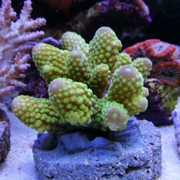 Zu Besuch bei Nautilus Aquaristik